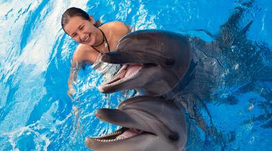 portugal-albufeira-ausflug-delfin-schwimmen