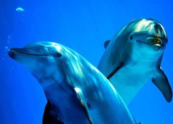 Italien Jugendreisen Delfine und Wale beobachten